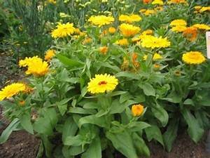 Plante Detoxifiante : plante benefice pentru zodiile din lunile de vara biaplant ~ Melissatoandfro.com Idées de Décoration