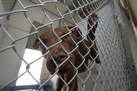 county animal shelters  florida