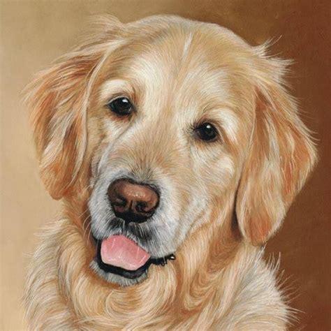 Golden Retriever Puppy Love Pinterest Dog Animal