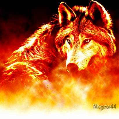 Wolf Fire Artwork