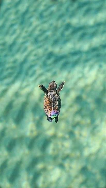 Turtle Wallpapers Vsco Sea