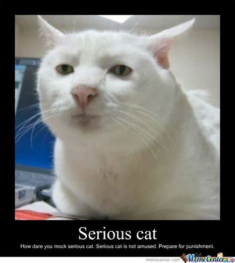 Serious Meme - serious cat memes image memes at relatably com