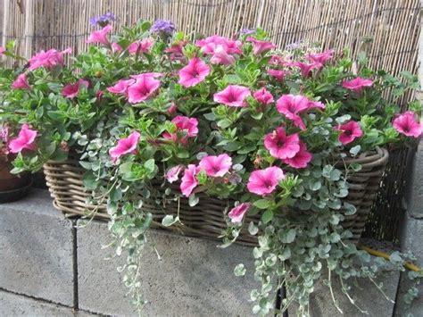 Blumenkasten Auf Die Fensterbänke