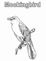 Coloring Mockingbird Pages Texas Printable Drawings Sketch 84kb 800px Template sketch template