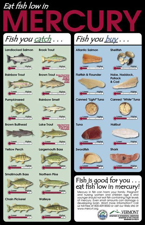 graphics  mercury   junk  fish