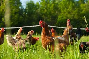 Pasture Raised -- How One Company Is Trying To Make The ...