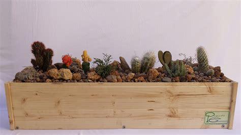 vaso piante grasse composizione piante grasse in vaso galleria di immagini