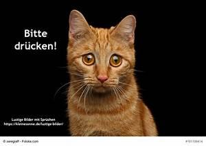 Emotionale Bilder Mit Sprüchen : 33 besten humor witze und lustige bilder bilder auf pinterest lustige bilder kostenlos ~ Eleganceandgraceweddings.com Haus und Dekorationen