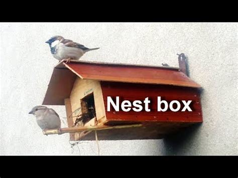 birdhouse idea     bird house  home birds nesting box youtube