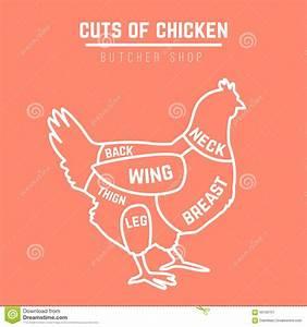Cuts Of Chicken Butcher Diagram Stock Illustration