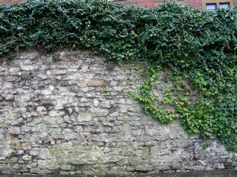 ivy  walls research project research projects oxford