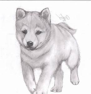 Drawings Of Cute Animals In Pencil Easy Easy Pencil ...