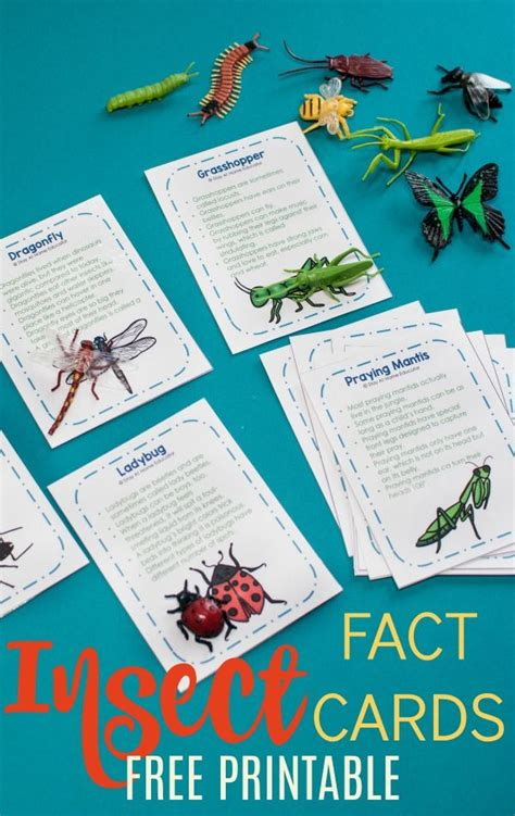 945 best bugs amp insect activities for images on 407   d3bf0ffb46227149a8a4fa4b9a0ede4e