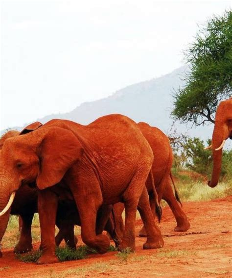 Best Safaris In Kenya 9 Days Best Kenya Safari
