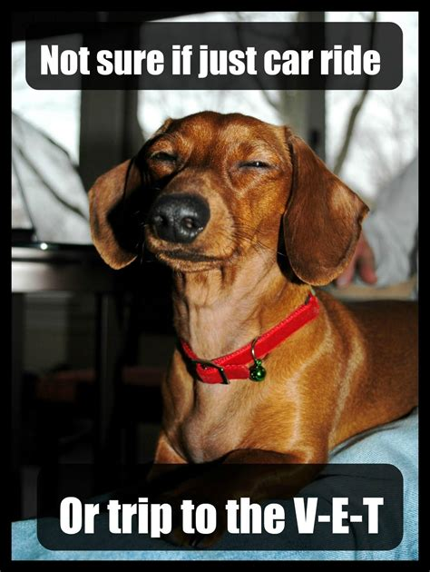 Wiener Dog Meme - doggy sense