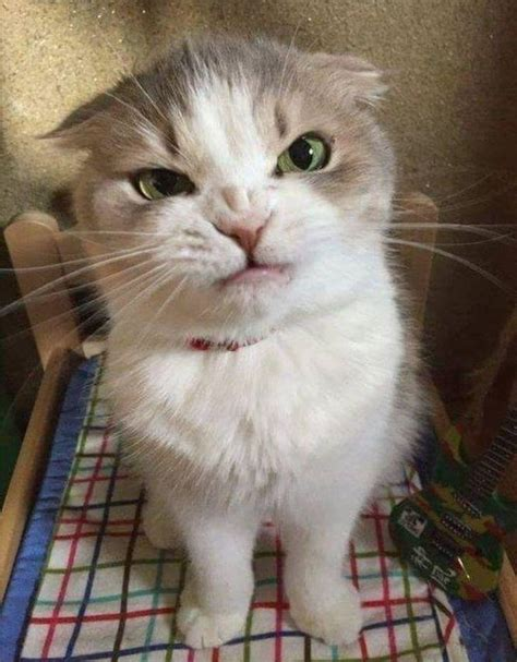 Un atkal kaķi... - Spoki