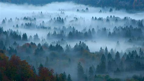 wallpaper fog forest bing microsoft  os