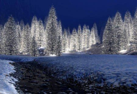 christmas trees winter nature background wallpapers