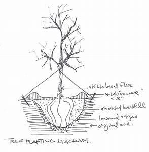 Brantley Snipes Landscape   Design  Fruit Trees