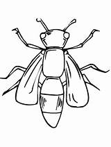 Coloring Bug Pages Printable Insect sketch template