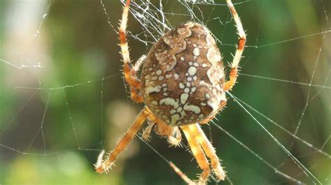 Skorpione, Schlangen, Spinnen & Co Diese Giftigen Tiere