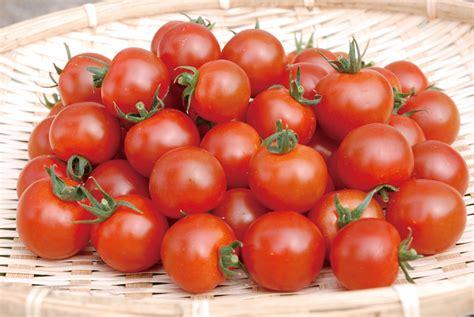 ミニ トマト トマト ソース