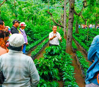This coffee pot is well suited for all. Coffee Tour in a Coffee Plantation in Antigua Guatemala - Around Antigua