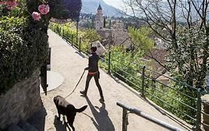 Ideale Körpermaße Frau Berechnen : urlaub mit dem hund in s dtirol hotel in marling ~ Themetempest.com Abrechnung
