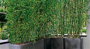 usages particuliers mon jardin ma maison With idee amenagement jardin paysager 1 haie de bambous une idee de plus en plus seduisante
