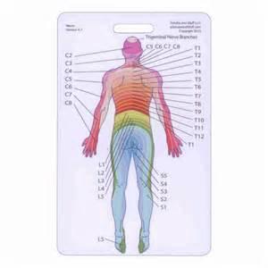 Dermatome Scale