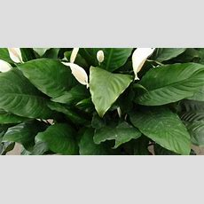 Tropical Plants Pictures And Names  10″ Potted Plant