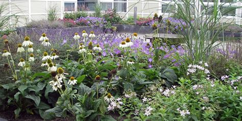 alzhaimer tuin tuin bij verzorgingstehuis tuinontwerp voorbeelden voor
