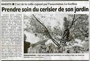 Taille De Cerisier : taille des cerisiers avec le greffon sur le clos monard ~ Melissatoandfro.com Idées de Décoration