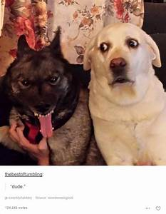 15+ Dog Posts On Tumblr That Are Impossible To Get Through ...