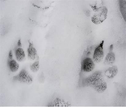 Ice Paw Snow Prints Dog Rescue Pet