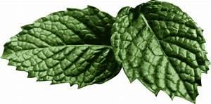 Mint Leaves Clip Art at Clker.com - vector clip art online ...