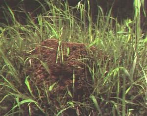 Gelbe Stellen Im Rasen : hilfe gegen ameisen im garten great ameisen in der k che ursache photos spray gegen rote ~ Markanthonyermac.com Haus und Dekorationen