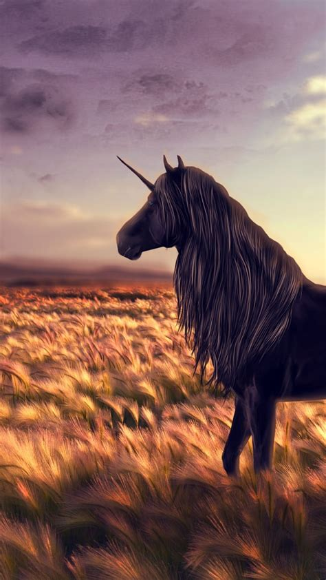 wallpaper unicorn horse nature black art