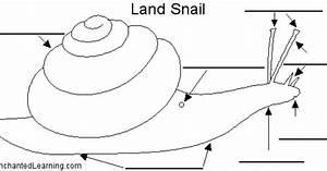 Land Snail Anatomy Diagram To Label