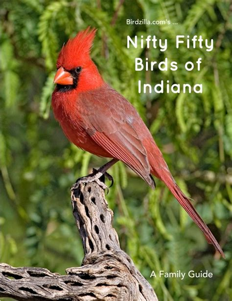 nifty fifty birds of indiana by sam crowe home garden