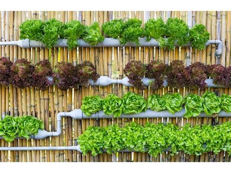 Vertical Garden Supplies by Vertical Gardens And Hydroponic Supplies For Sale In