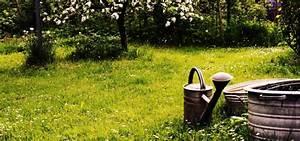 Dünger Für Kirschlorbeer : d nger f r pflanzen ganz nat rlich selber machen ~ Lizthompson.info Haus und Dekorationen