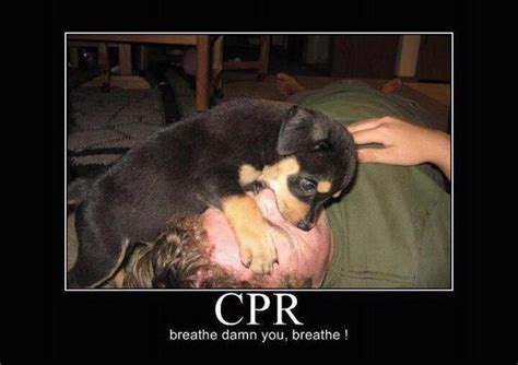 Cpr Dummy Meme - cpr just breathe too funny pinterest
