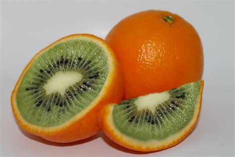 orange hybrid fruit fruit hybrid luophotography