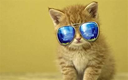 Wallpapers Cats Laptop Dell Kitten Feline