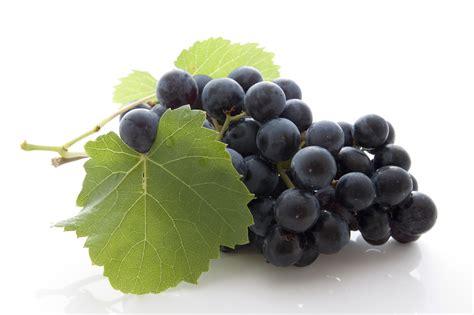 le grappe de raisin plantes