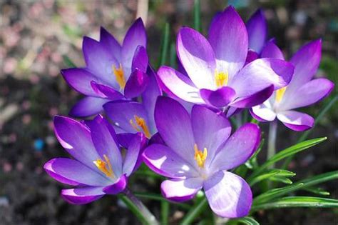ดอกไม้สวยๆ - ธิดาแห่งสายลม - GotoKnow