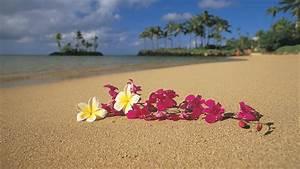Pink Hawaiian Flower Background
