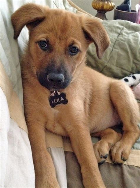 Cute Mixed Breed Dogs You Need To Know About Slice Ca