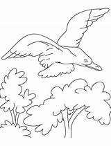 Seagull Drawing Colour Albatross Couple Coloring Template Gull sketch template